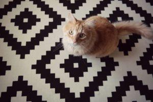 Na kočky s repelentem?